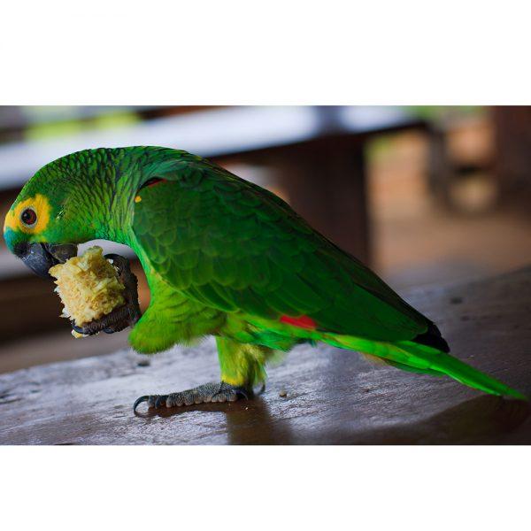 Papagaios at Chapada imperial