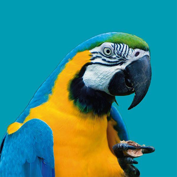 guacamayo azul y amarillo